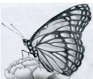 Dibujar Mariposas A Lápiz Fácil Paso a Paso