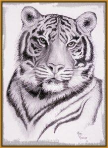 Cómo Dibujar Tigres A Lápiz Fácil Paso a Paso