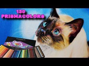 Cómo Dibuja Un Gato Siamés Realista Con Lápices De Colores Paso a Paso Fácil