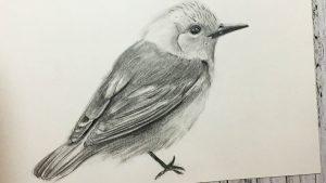 Cómo Dibujar Un Pájaro Realista Fácil Paso a Paso