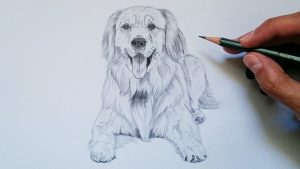 Dibuja Un Perro Realista Paso a Paso Fácil