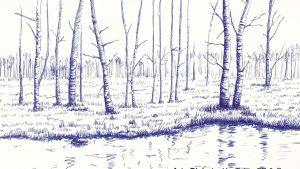 Dibujar Un Bosque Fácil Paso a Paso