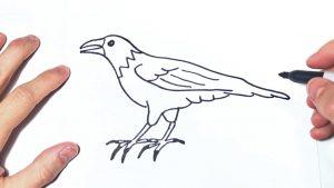Dibujar Un Cuervo Fácil Paso a Paso