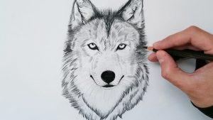 Dibuja Un Lobo Realista Fácil Paso a Paso