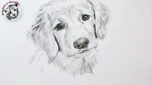 Dibujar Un Perro A Lápiz Paso a Paso Fácil