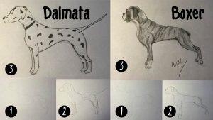 Cómo Dibuja Un Perro Boxer Fácil Paso a Paso