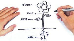 Dibujar Una Planta Fácil Paso a Paso