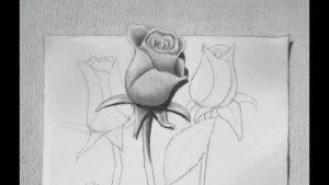Dibuja Una Rosa En 3D Paso a Paso Fácil