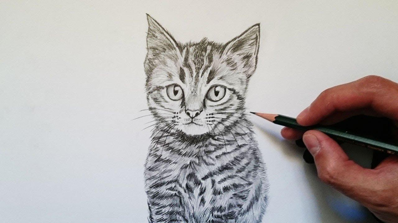 Cómo Dibuja Un Gato A Lápiz Paso a Paso Fácil