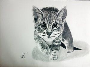 Dibujar Un Gato En Blanco Y Negro Paso a Paso Fácil