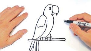 Dibujar Un Loro Fácil Paso a Paso