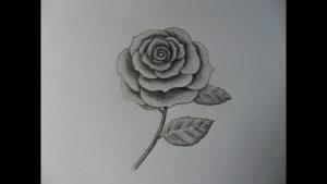 Dibujar Una Rosa Realista Fácil Paso a Paso