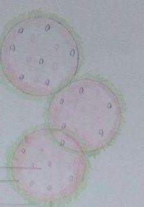 Dibujar El Proceso Antes Indicado Rotulando Cada Uno De Los Elementos Paso a Paso Fácil