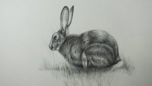 Dibuja Un Conejo A Lápiz Fácil Paso a Paso