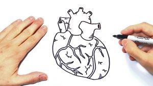 Dibujar Un Corazón Humano Fácil Paso a Paso