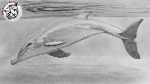 Dibuja Un Delfin A Lápiz Paso a Paso Fácil