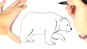 Dibuja Un Oso Pardo Fácil Paso a Paso