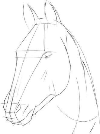 Resultado de la imagen de cómo dibujar una cabeza de caballo paso a paso  # caballo #cabeza #dibujar #i…  Cabeza de caballo  Dibujo de caballos  Dibujo  paso a paso, dibujos de La Cabeza De Un Caballo, como dibujar La Cabeza De Un Caballo paso a paso