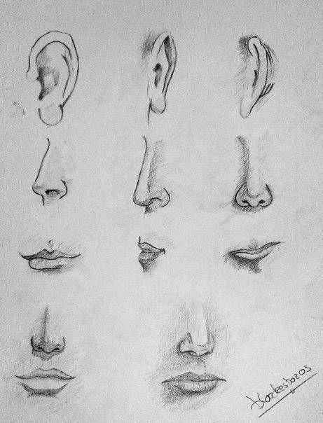pasos para dibujar una nariz de mujer  Cómo dibujar una nariz  Dibujar  narices  Como dibujar nariz, dibujos de Una Nariz, como dibujar Una Nariz paso a paso