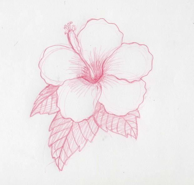 como hacer una flor hawaiana - Buscar con Google  Como dibujar flores   Flores dibujadas a lapiz  Flores a lapiz, dibujos de Flores A Lápiz, como dibujar Flores A Lápiz paso a paso
