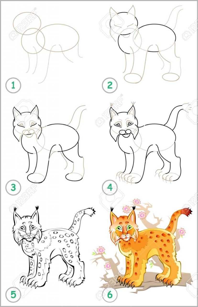 La página muestra cómo aprender paso a paso a dibujar un lince -  Desarrollar  habilidades infantiles para dibujar y colorear -, dibujos de Un Lince, como dibujar Un Lince paso a paso