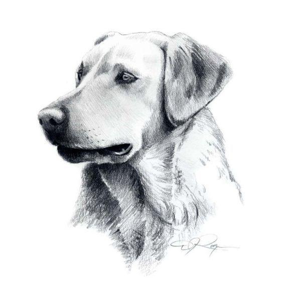 fotos de dibujos de perros a lapiz Dibujos de perros Perros dibujos a lapiz Animales dibujados a lapiz, dibujos de Un Perro A Lápiz, como dibujar Un Perro A Lápiz paso a paso