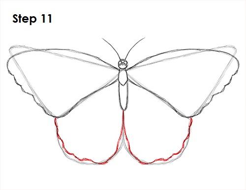 Dibujar Mariposa 11