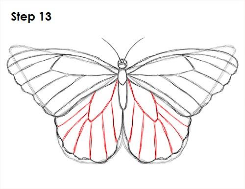 Dibujar Mariposa 13