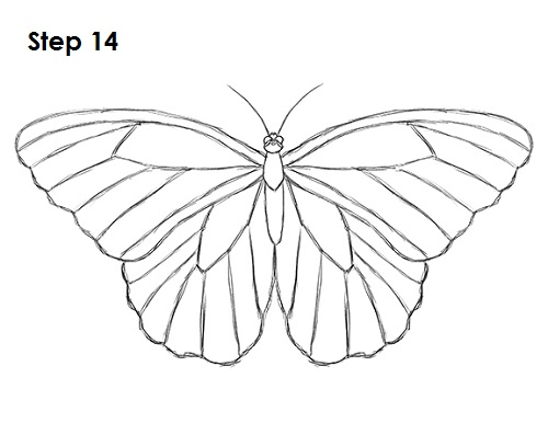 Dibujar Mariposa 14