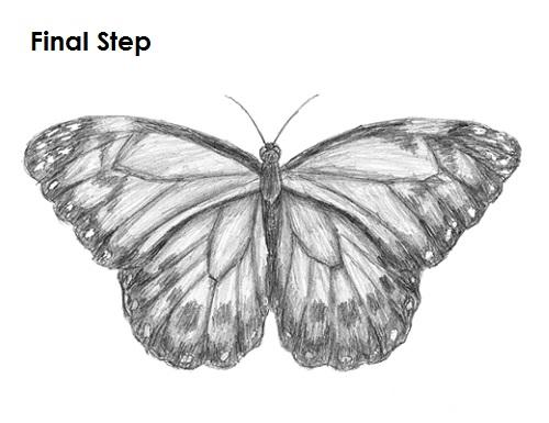 Dibujar Mariposa Final