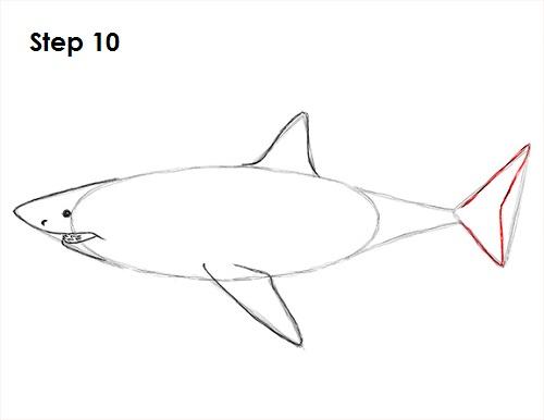 Dibujar gran tiburón blanco 10