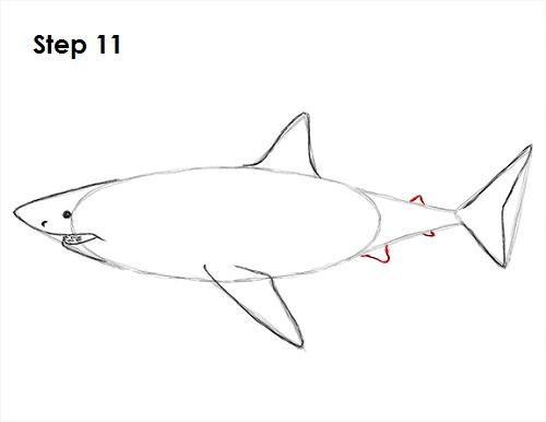 Dibujar gran tiburón blanco 11
