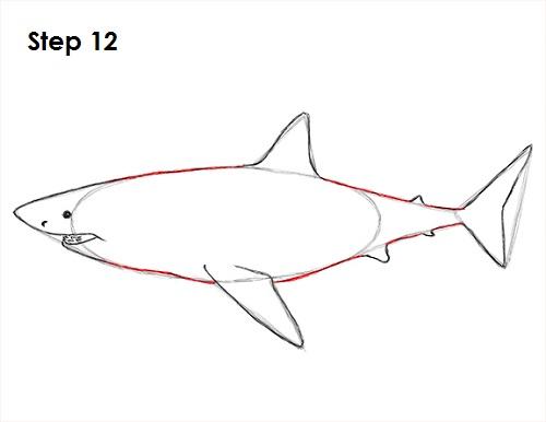 Dibujar gran tiburón blanco 12