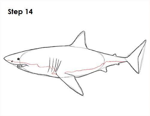 Dibujar gran tiburón blanco 14
