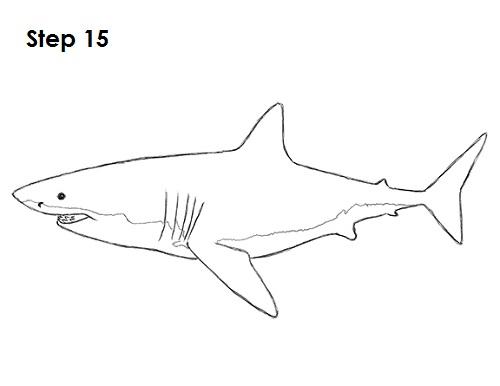 Dibujar gran tiburón blanco 15