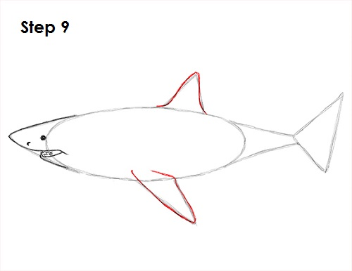 Dibujar gran tiburón blanco 9