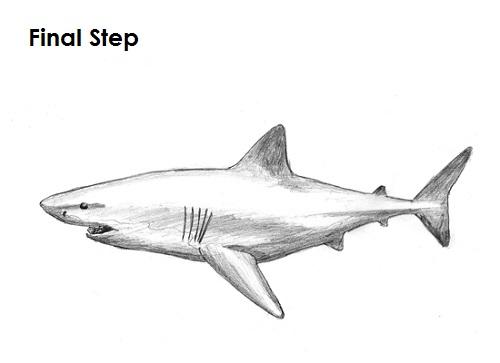 Dibujar la final del gran tiburón blanco
