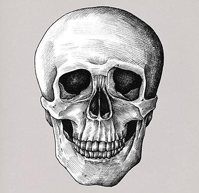 Dibujo detallado de un cráneo humano