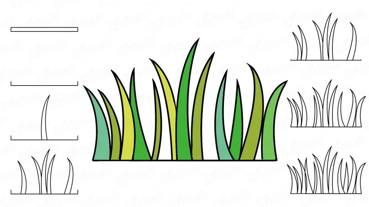 Cómo dibujar la hierba paso a paso, dibujos de Hierba, como dibujar Hierba paso a paso