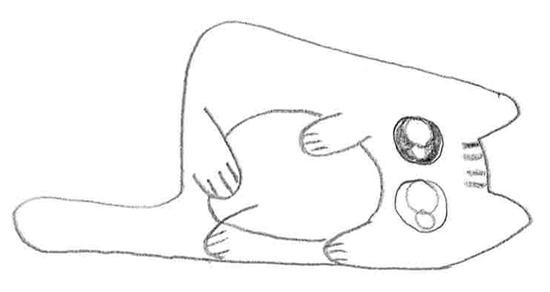 cómo dibujar un gato estilo cute