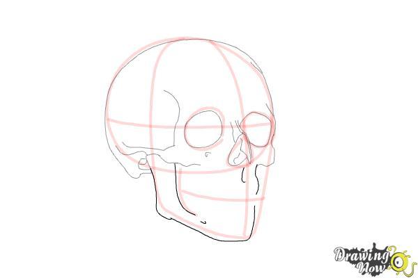 Cómo dibujar una calavera paso a paso - Paso 7