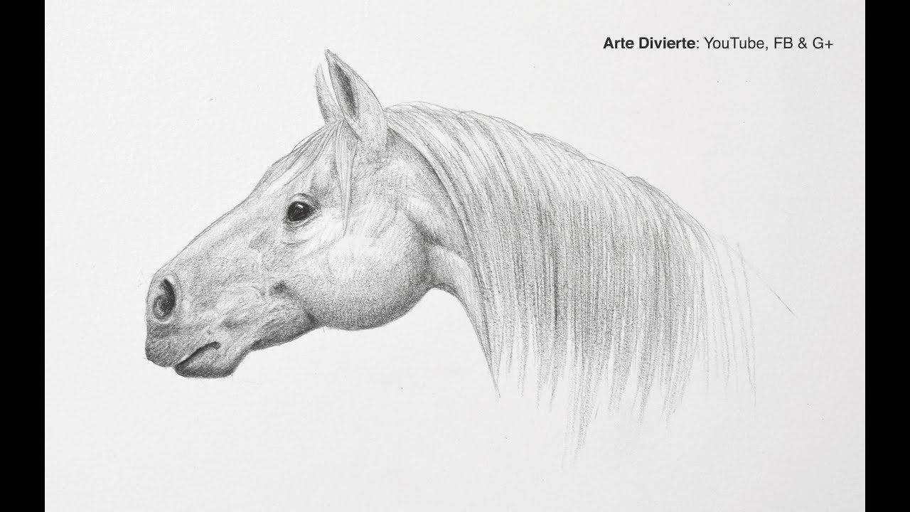 Cómo dibujar una cabeza de caballo - Paso a paso - Fácil, dibujos de La Cabeza De Un Caballo, como dibujar La Cabeza De Un Caballo paso a paso