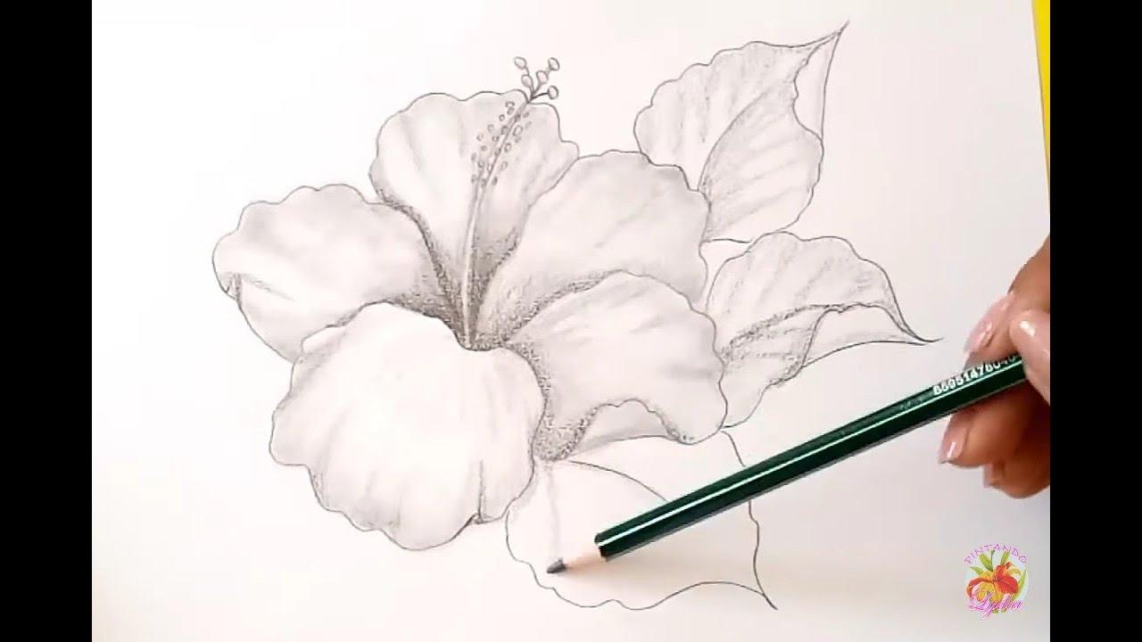 Dibujos A Lápiz Como Dibujar Una Flor  Hibiscus  How To Draw A Flower, dibujos de Flores A Lápiz, como dibujar Flores A Lápiz paso a paso