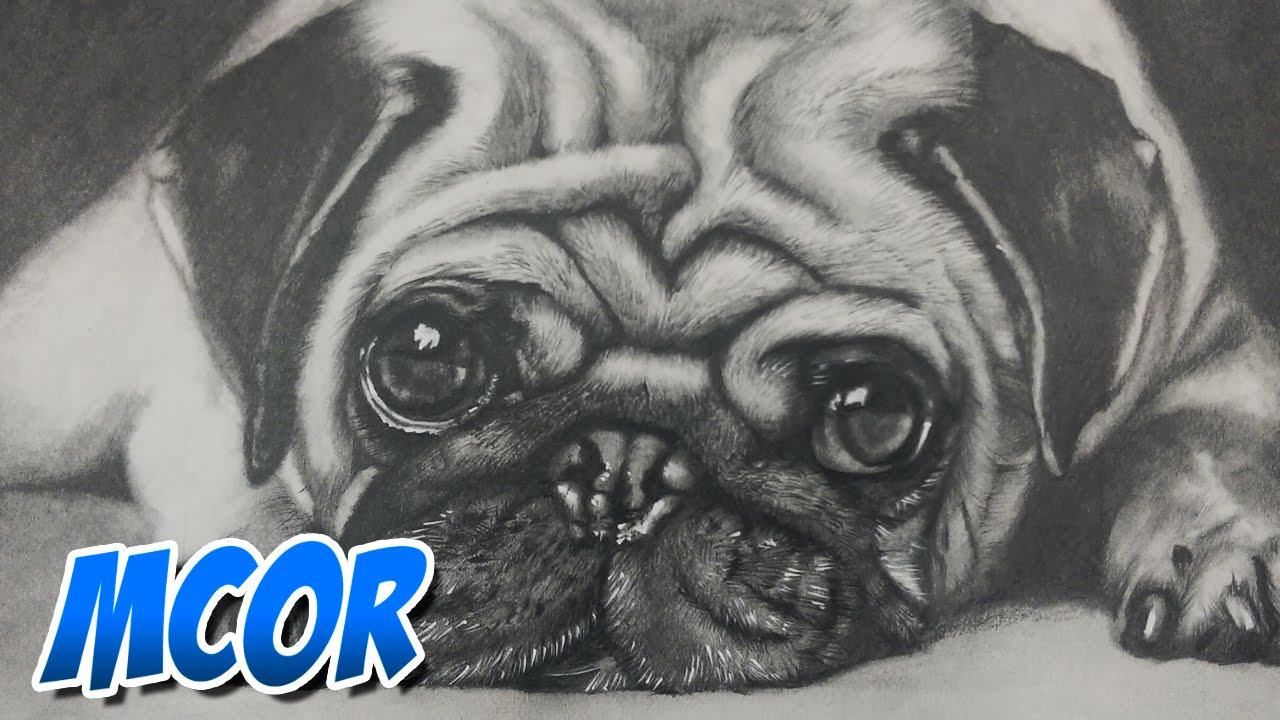 Dibujando un Perrito Pug, dibujos de A Un Perro Pug, como dibujar A Un Perro Pug paso a paso