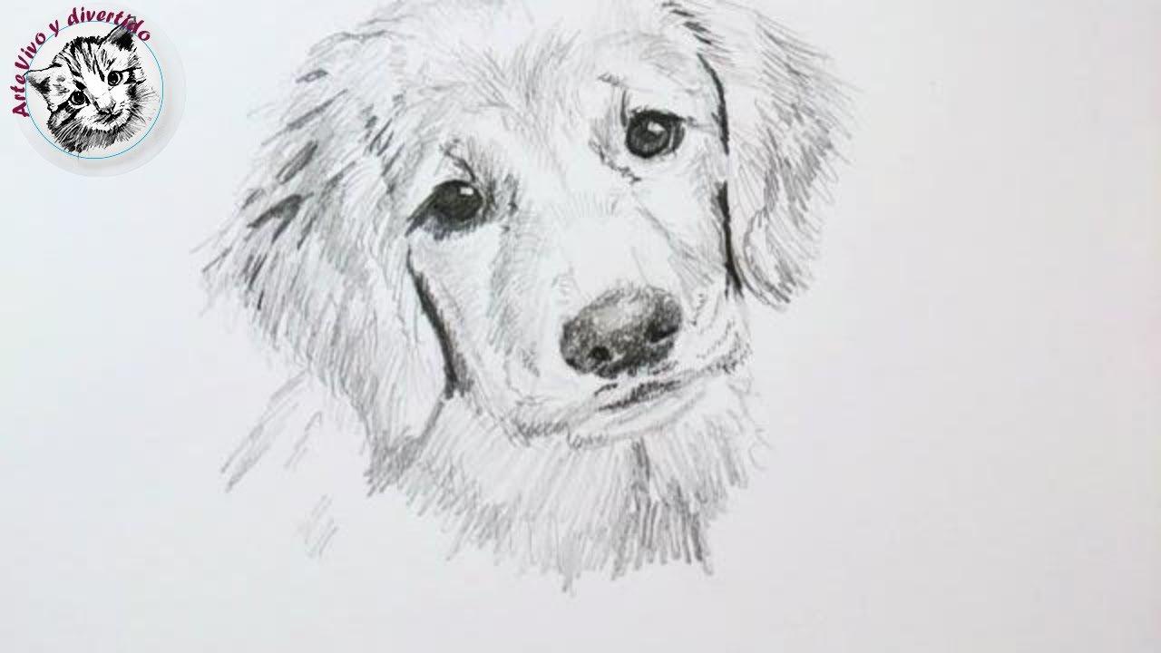 Tips y Trucos de Dibujo con Lapiz Cómo Dibujar un Perro (audio completo y mejorado), dibujos de Un Perro A Lápiz, como dibujar Un Perro A Lápiz paso a paso
