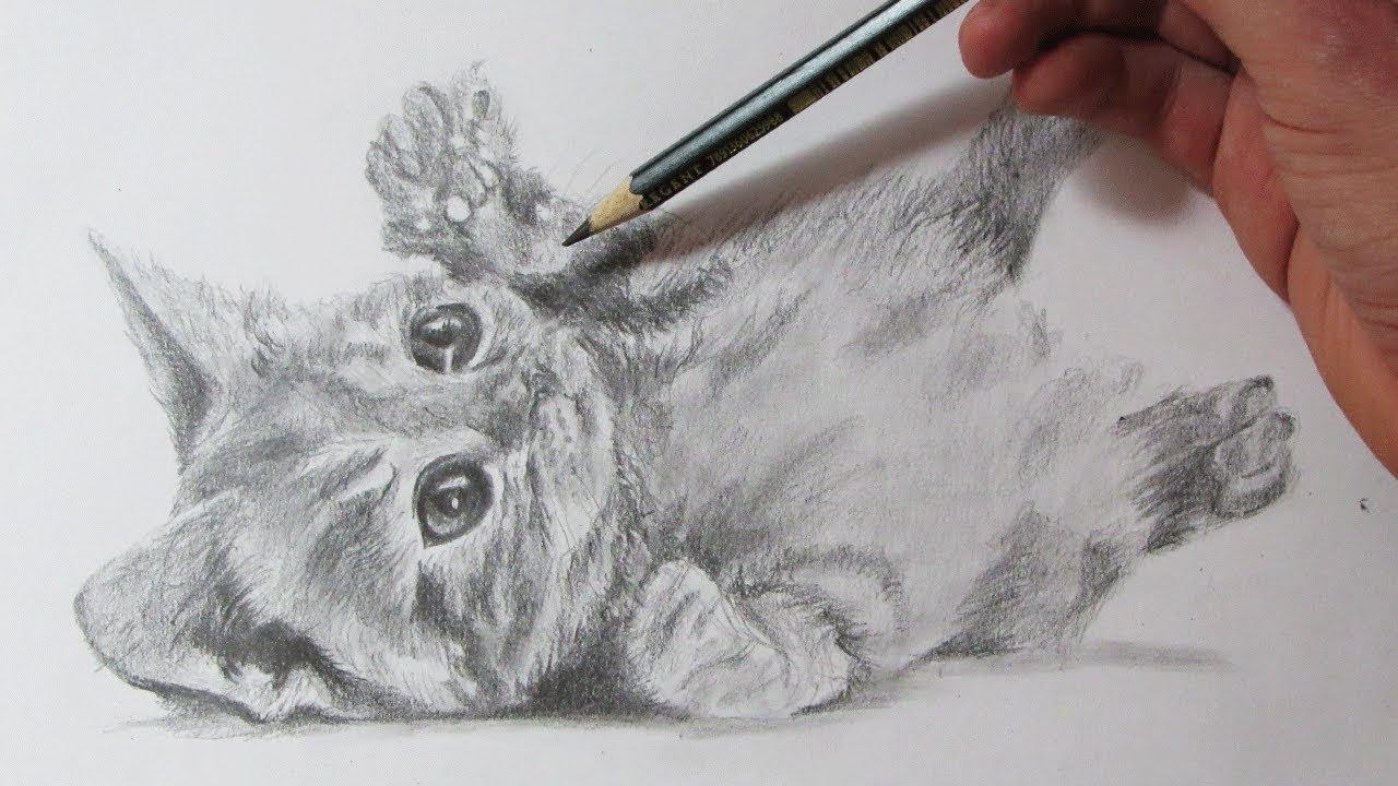Cómo Dibujar un Gato Realista Ho to Draw a Cat, dibujos de Un Gato Realista, como dibujar Un Gato Realista paso a paso