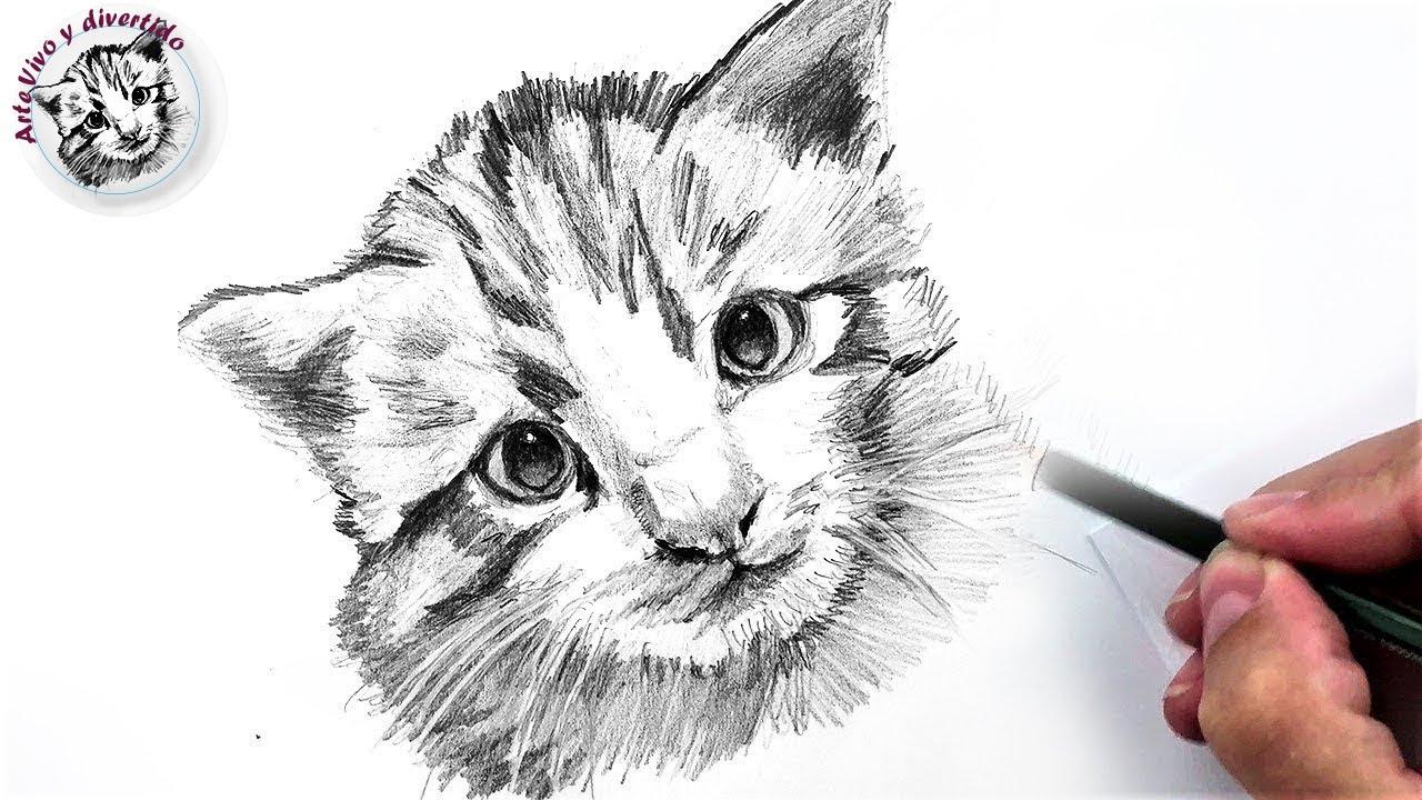 Cómo Dibujar un Gato Pequeño a Lápiz Fácil  Paso a Paso, dibujos de Un Gato A Lápiz, como dibujar Un Gato A Lápiz paso a paso