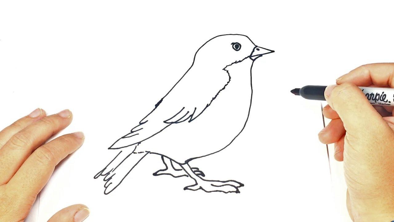 Como dibujar un Pajaro paso a paso fácil, dibujos de Un Ave, como dibujar Un Ave paso a paso