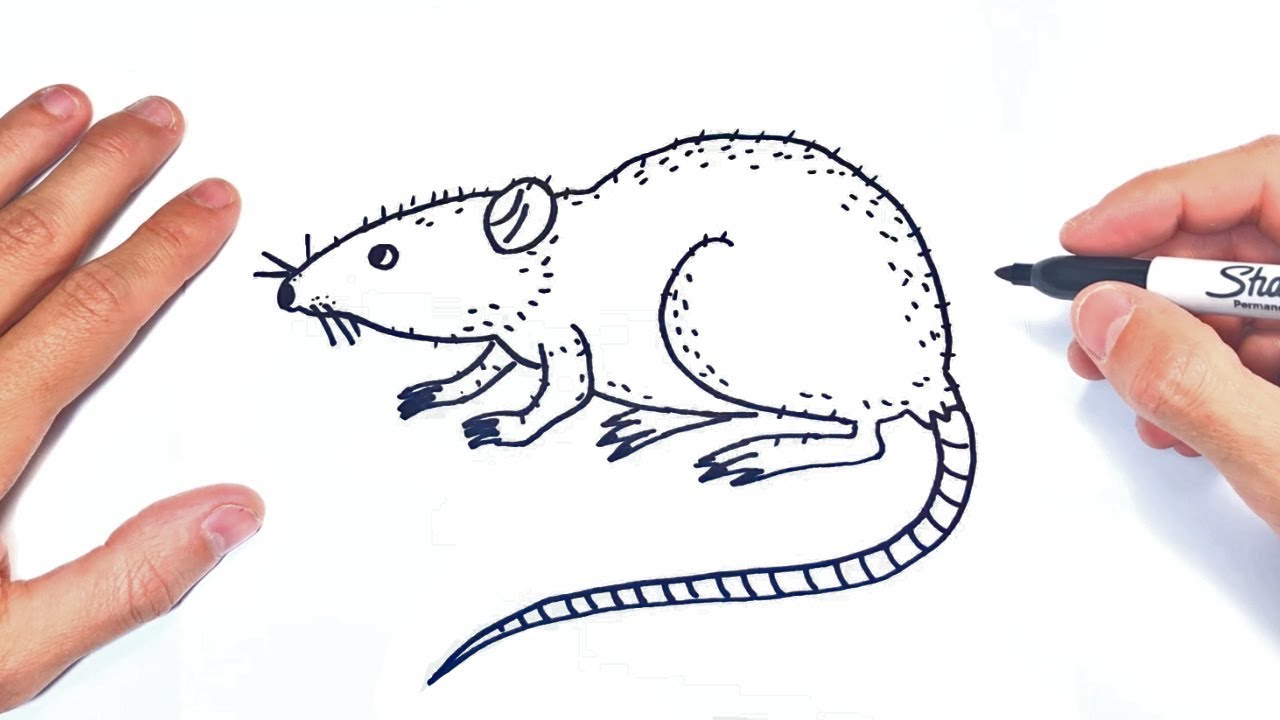 Cómo dibujar una Rata Paso a Paso  Dibujo de Rata, dibujos de Una Rata, como dibujar Una Rata paso a paso